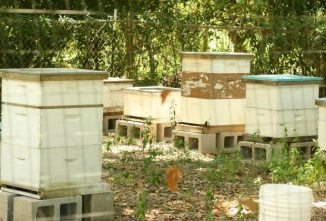 What You Need to Know About Apiary Layout