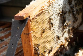 LIST: Common Beekeeping Terms You Should Know
